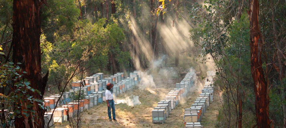 Currently Northern Light Candle Company is devoting much research into a new hive design based upon what bees prefer, and also to a feeding programme for bees which raises their immunity to pesticides. Over the last 8 years of research very heartening results have been ascertained, at a time when bees most need it.